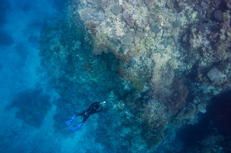 A snorkeller freedives to take a photo on Keeper Reef in the Great Barrier Reef