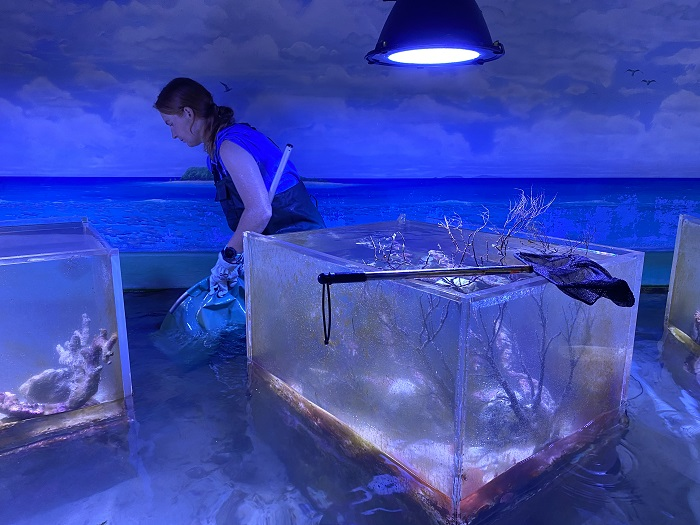 An aquarist stands at the back of the tank with a net.