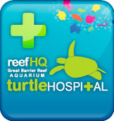 Image of Reef HQ Aquarium Turtle Hosptial Logo