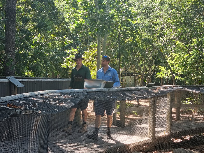 A freshwater turtle is being relocated to Billabong Sanctuary